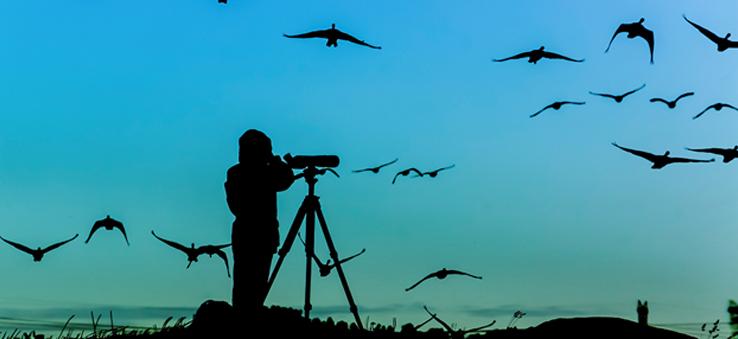 Наблюдение за птицами (Birdwaching)